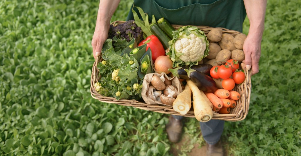 Farmer carrying organic vegetables in box for delivery, close up